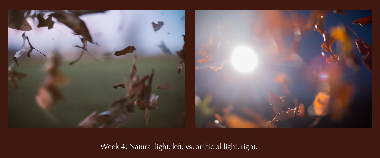 52woa Week 4 Natural Light Vs Artificial Light