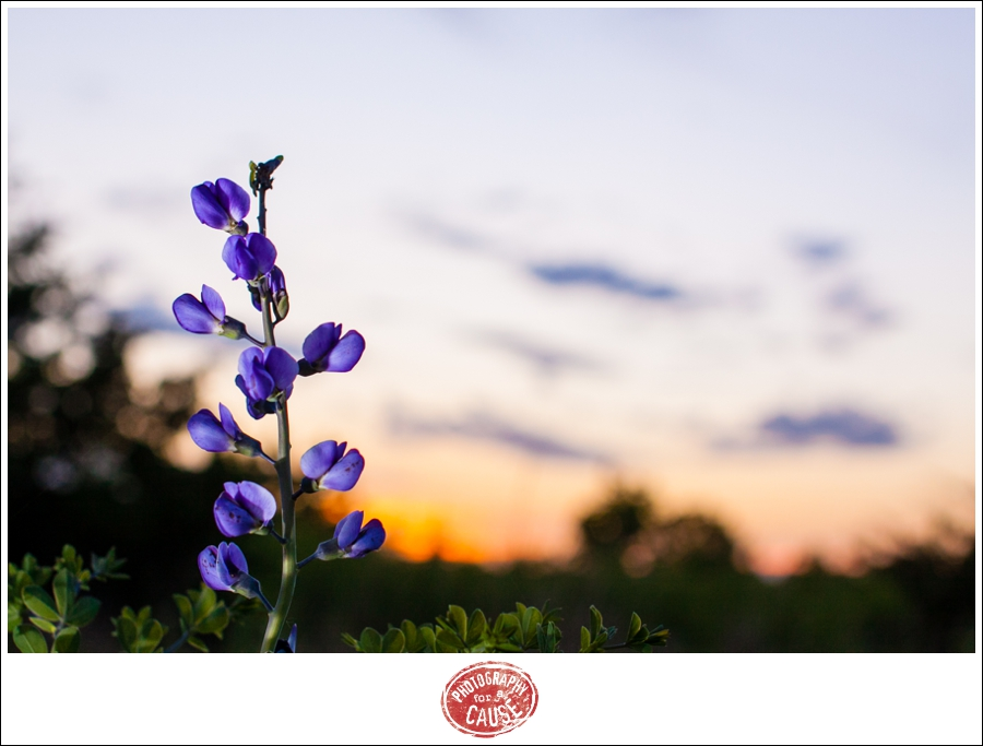 20120424_Autumn_04-1812729981-O