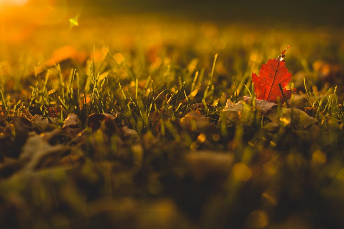 141014_autumn_002